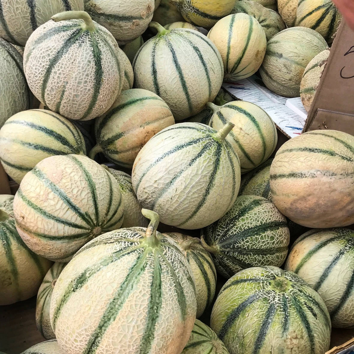 Provence, melons